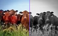 Colorize Photos, transformar una foto en blanco y negro a color